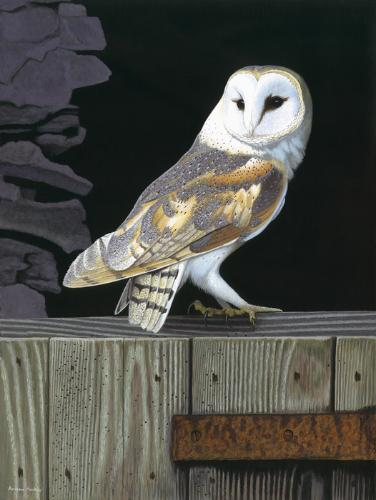 Artwork Barn Owl