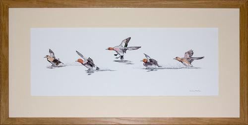 Artwork Wigeon