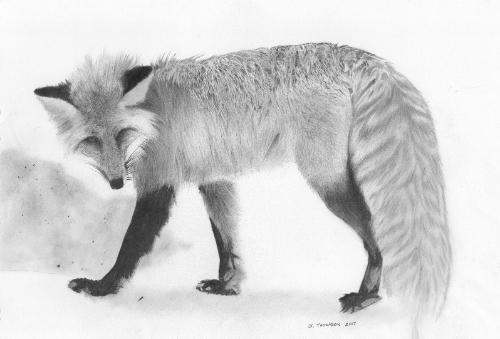 Artwork Hungry Fox