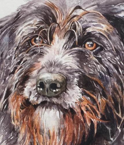 Harvey by Louiseportraits - Use the 'Create Similar' button to commission an artist to create your own artwork.