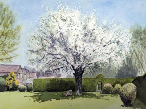 Artwork Wild Pear in Blossom