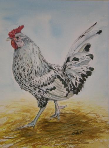 Artwork The Silver Spangled Hamburg Cockerel