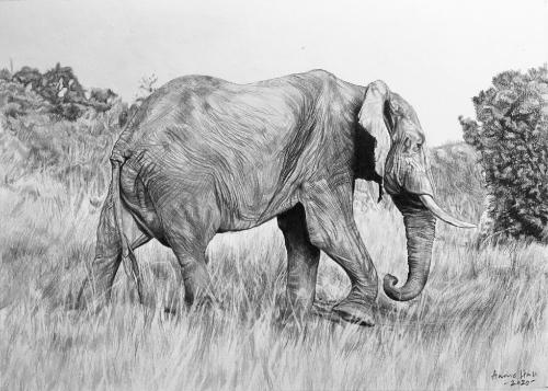 Artwork African Elephant on safari