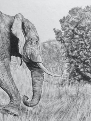 African Elephant on safari by AnnieH - Use the 'Create Similar' button to commission an artist to create your own artwork.