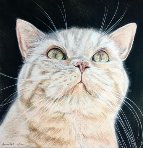 Artwork Cat in colour pastel pencils