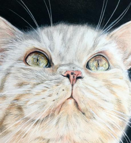 Cat in colour pastel pencils by AnnieH - Use the 'Create Similar' button to commission an artist to create your own artwork.