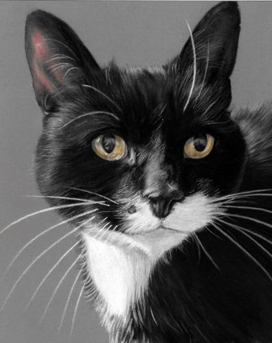 Artwork Black and white cat