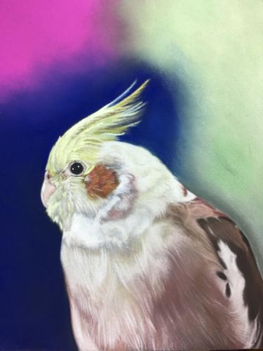Artwork Cockatiel