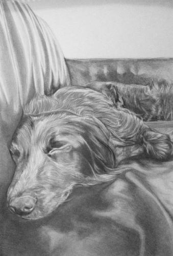 Artwork Sleeping doggy