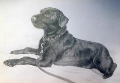 Artwork Terrier