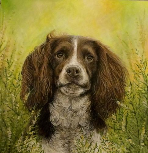 Artwork Spaniel In Heather