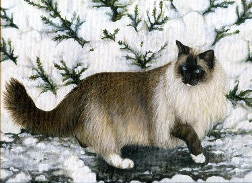 Artwork 'Pepper'  Ragdoll Cat