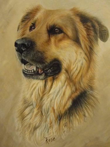 Artwork Rosie - German Shepherd Cross