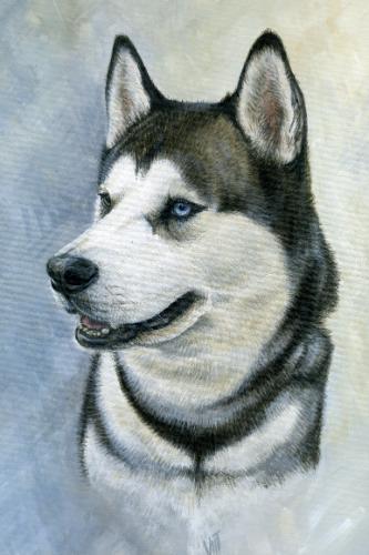Artwork Max Siberian Husky
