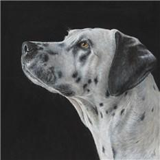 Artwork Cali the Dalmatian.