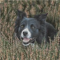 Artwork Bob the Border Collie