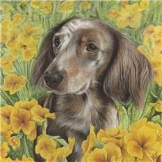 Artwork Dachsund in flowers.
