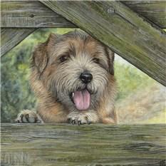 Artwork Norfolk Terrier, Tiffany