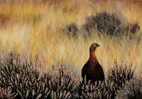 Artwork Moorland Grouse