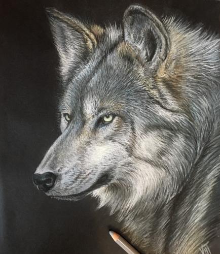 Artwork Lone Wolf
