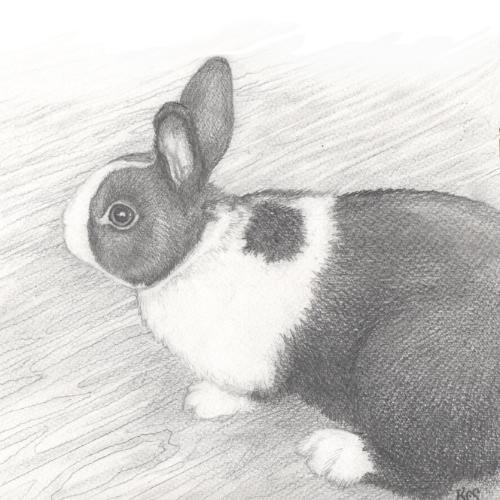 Artwork Rabbit Portrait
