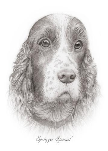 Artwork Springer Spaniel