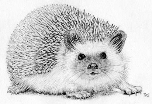 Artwork Hedgehog