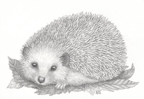 Artwork Hedgehog with autumn leaves