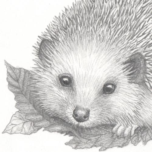 Hedgehog with autumn leaves by Kes