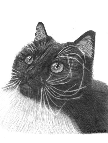 Artwork Pet Portrait - 'Tarka'