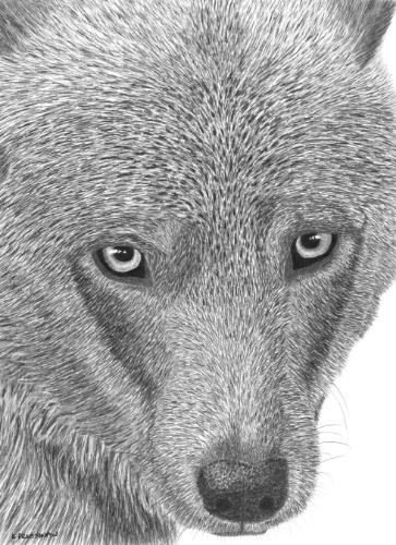 Artwork 'Wolf'