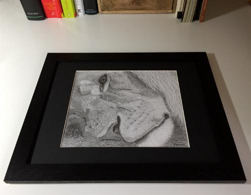 Reflection - Original graphite portrait of a lion by KateP - Use the 'Create Similar' button to commission an artist to create your own artwork.