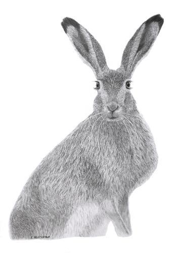 Artwork Brown Hare - original graphite portrait