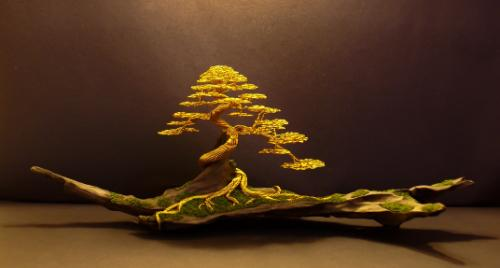 Artwork #24 - A gold 'informal upright' on driftwood