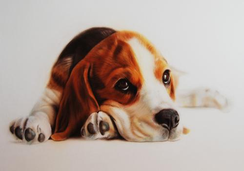Artwork Puppy