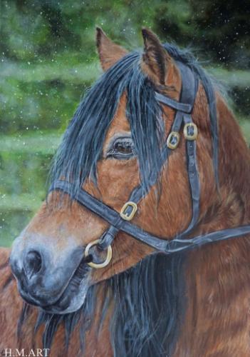 Artwork Dartmoor Pony