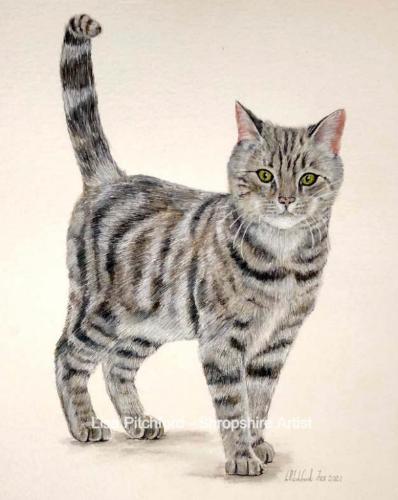Artwork Bob the Tabby Cat