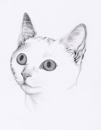Artwork Cat
