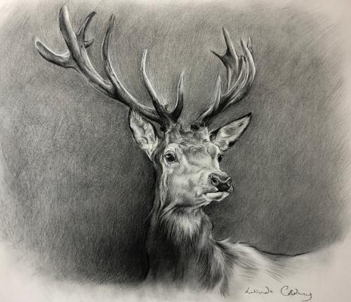 Artwork Majesty