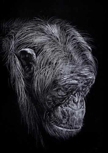 Artwork Chimpanzee
