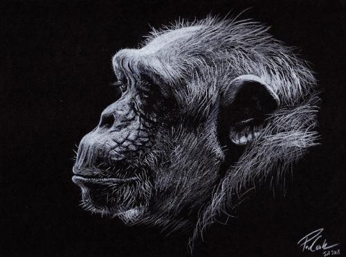 Artwork Chimpanzee In Profile