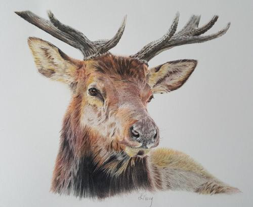 Artwork The Majestic Stag