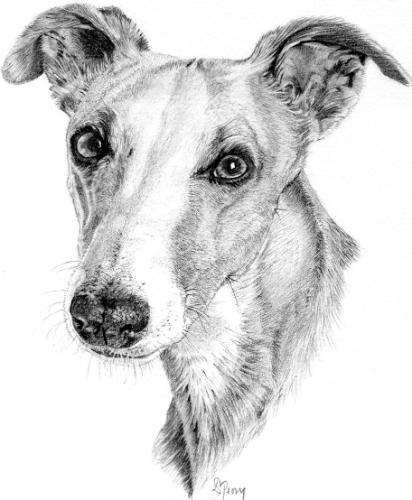 Whippet portrait by SarahP - Use the 'Create Similar' button to commission an artist to create your own artwork.