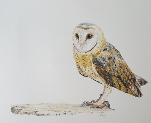 Artwork Barn Owl