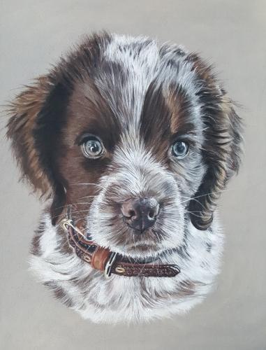 Artwork Spaniel puppy