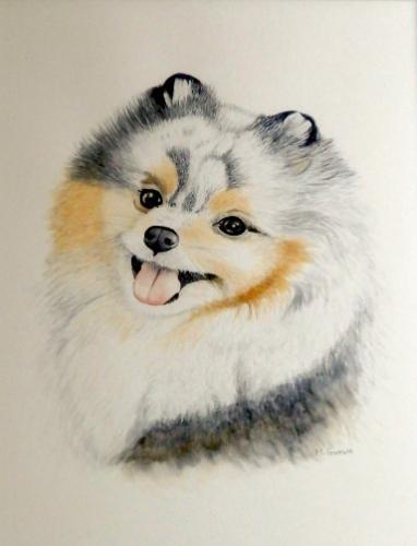 Artwork Happy Pomeranian