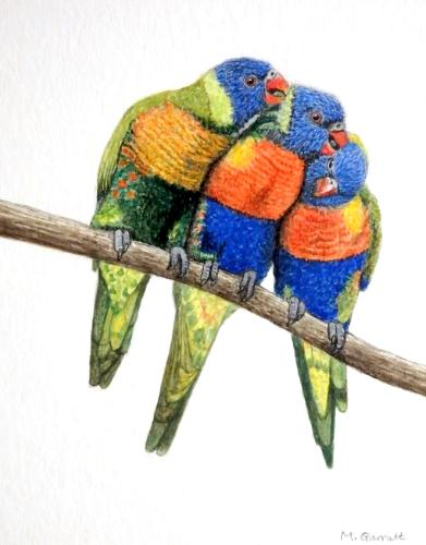 Artwork 'Lorikeets', watercolour on paper