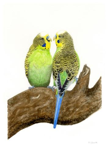 Artwork 'Budge Over', watercolour on paper