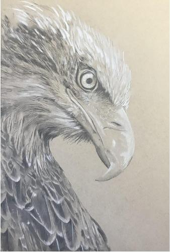 Artwork Eagles head