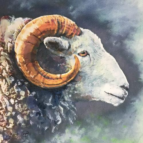 Artwork Herdwicks head